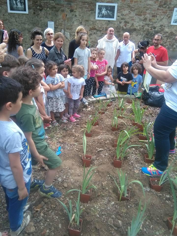 planting irs in Nidiaci garden